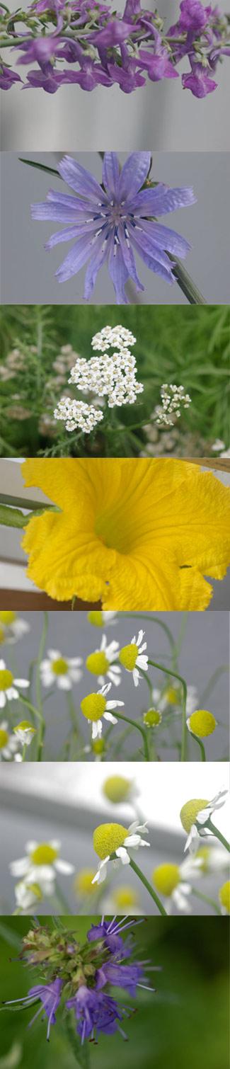 gardenflower.jpg
