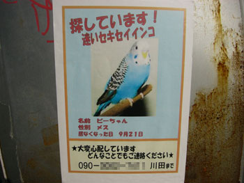 pi-chan.jpg