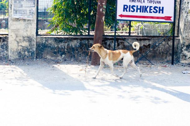 rishdog.jpg
