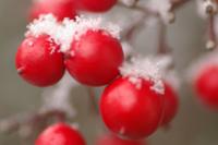 snow_w_Nanten.jpg