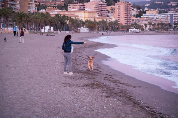 Beach near Maraga canter. run,run, run,Lucky(dog) got  churros!